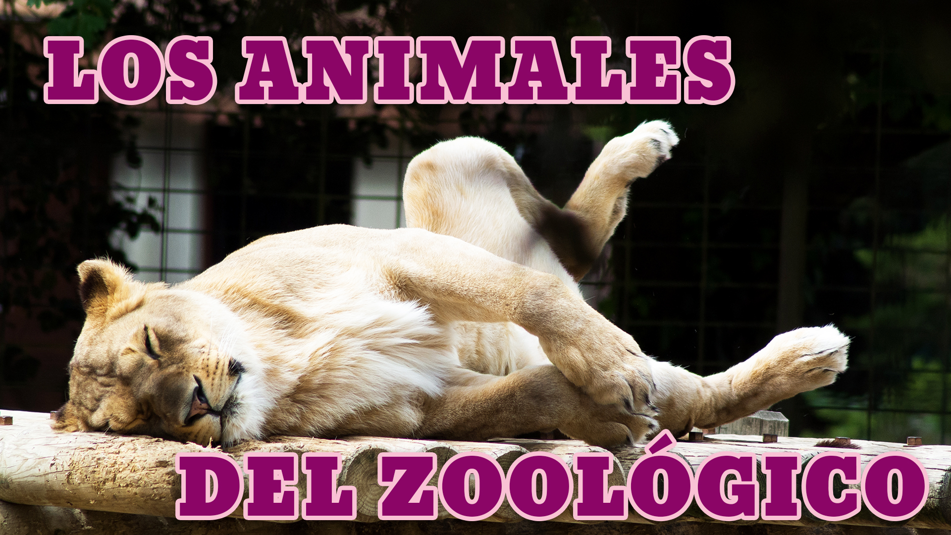 Zoo Animals In Spanish: List, Phrases And Listening
