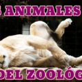 Phrases and zoo animals in Spanish list