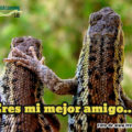 Making Friends in Spanish: Introductions and Greetings - Haciendo amigos en español