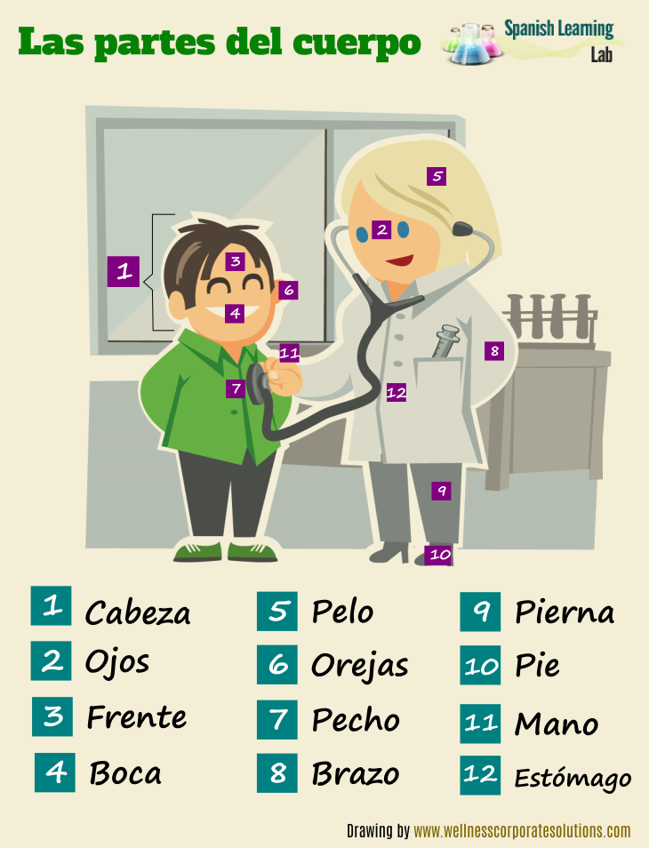 Human parts of the body in Spanish vocabulary and listening exercises